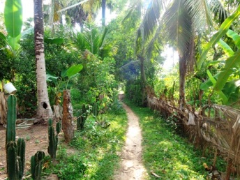 Walking trek hike eco tour